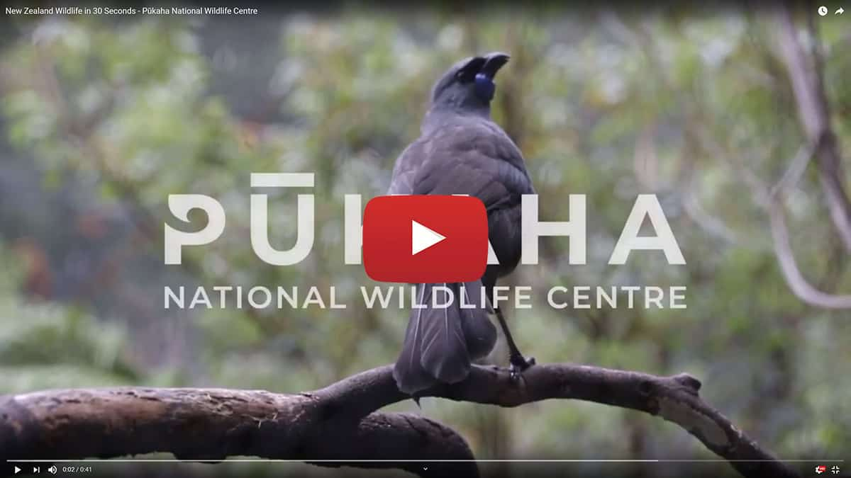 Video about Pukaha National Wildlife Centre