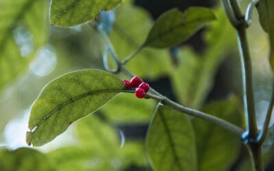 5 last-minute eco-friendly Christmas gifts from Pūkaha